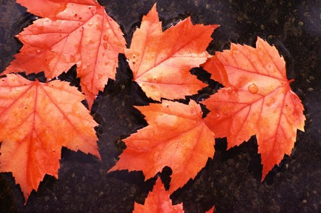 Un otoño anticipado