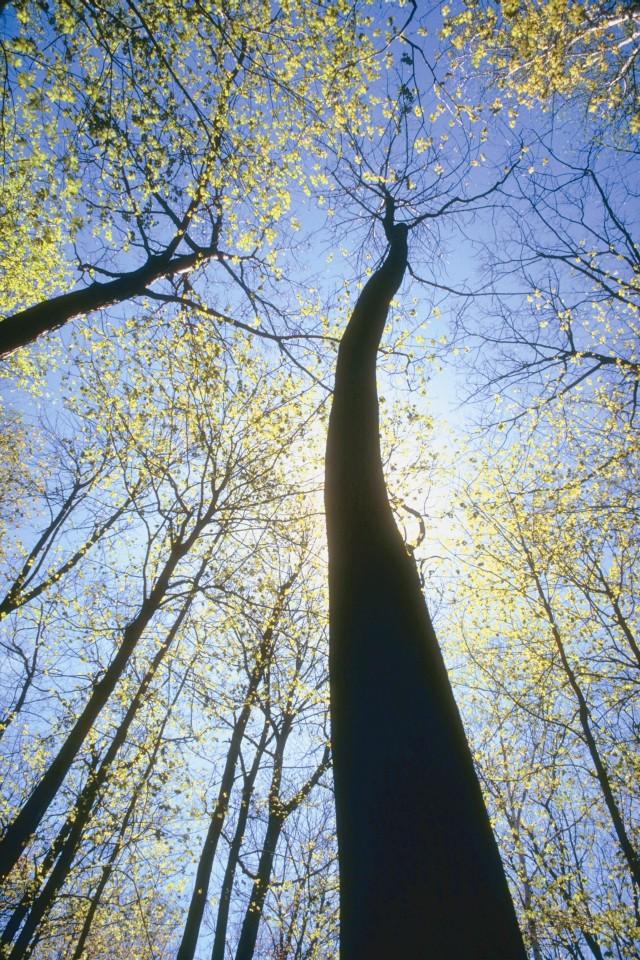 El bosque crece silencioso