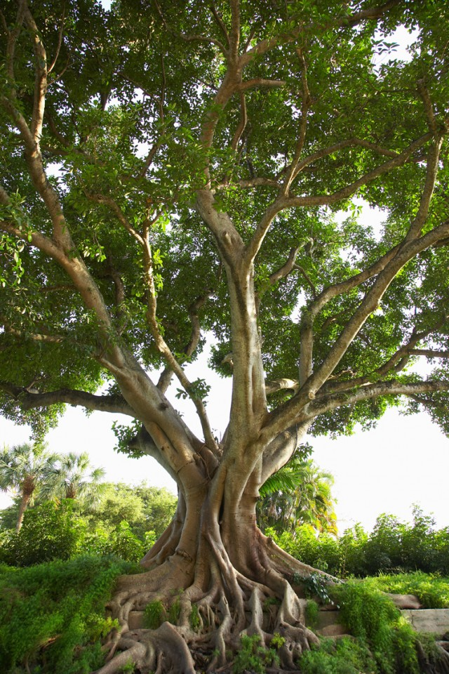 El árbol que me vio crecer