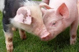 ¿Necesitaremos criar animales para alimentarnos?